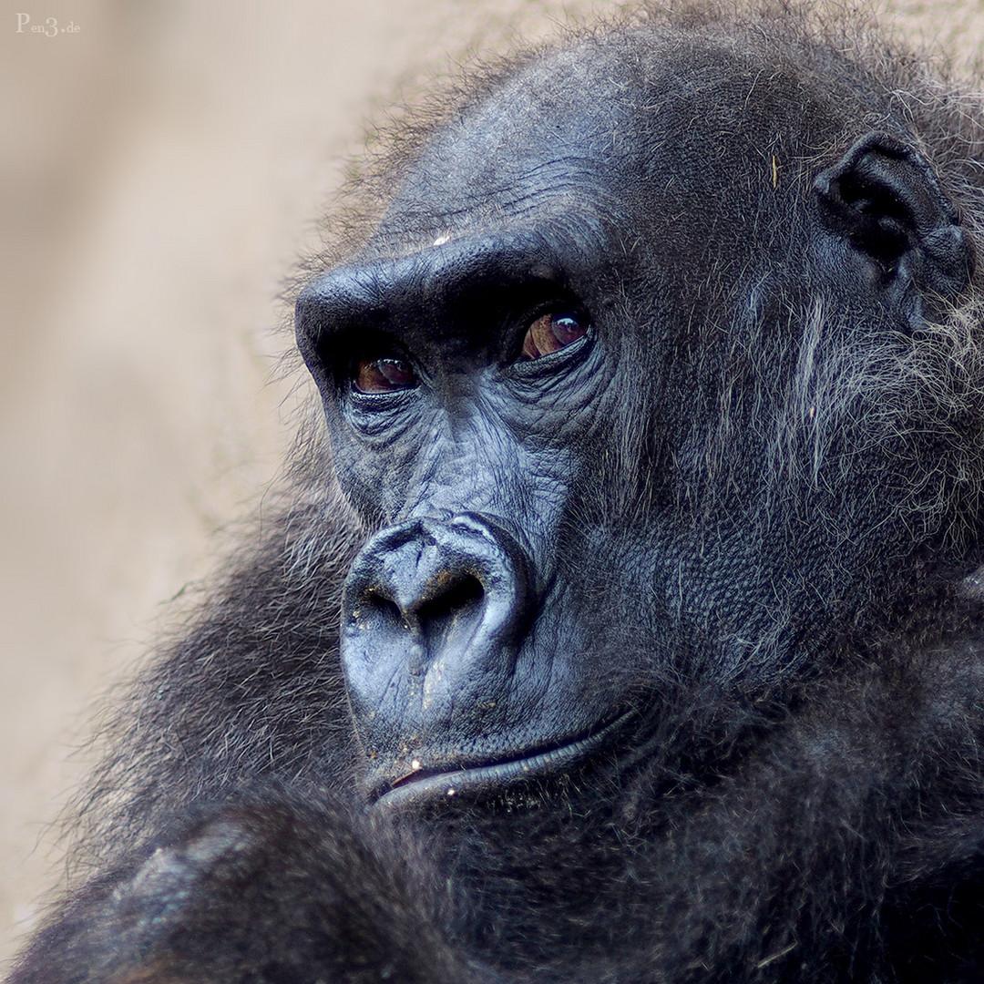 Gorillamädel