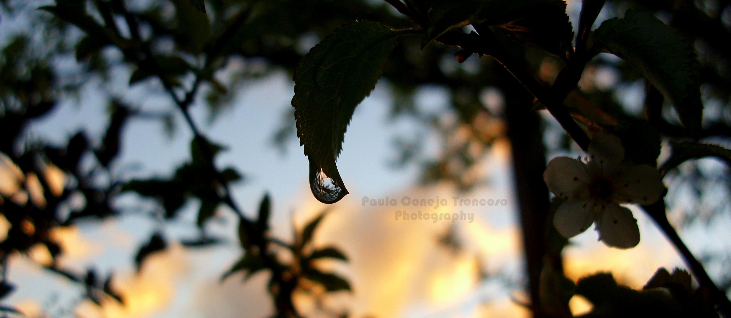 Gota de lluvia