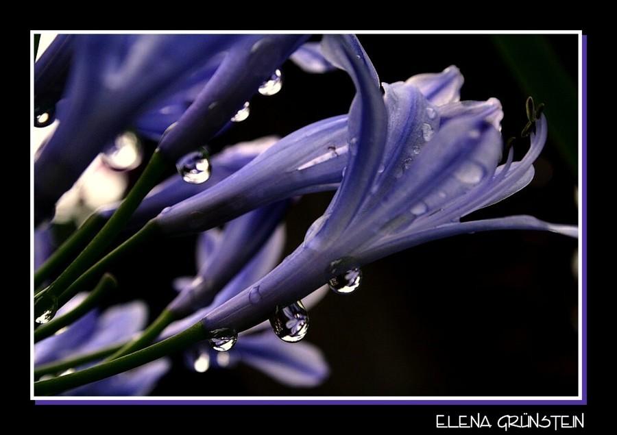 Gotas de agua con flores
