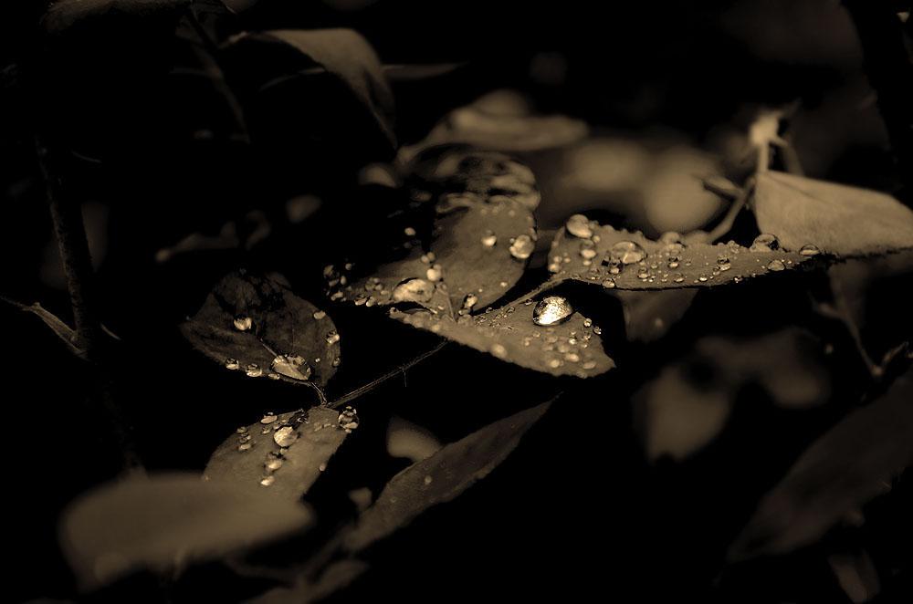 Gotas de lluvia en sepia