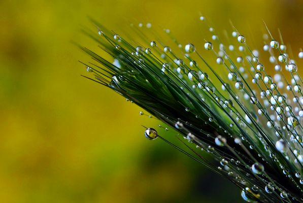 Gotas de lluvia-Raindrops