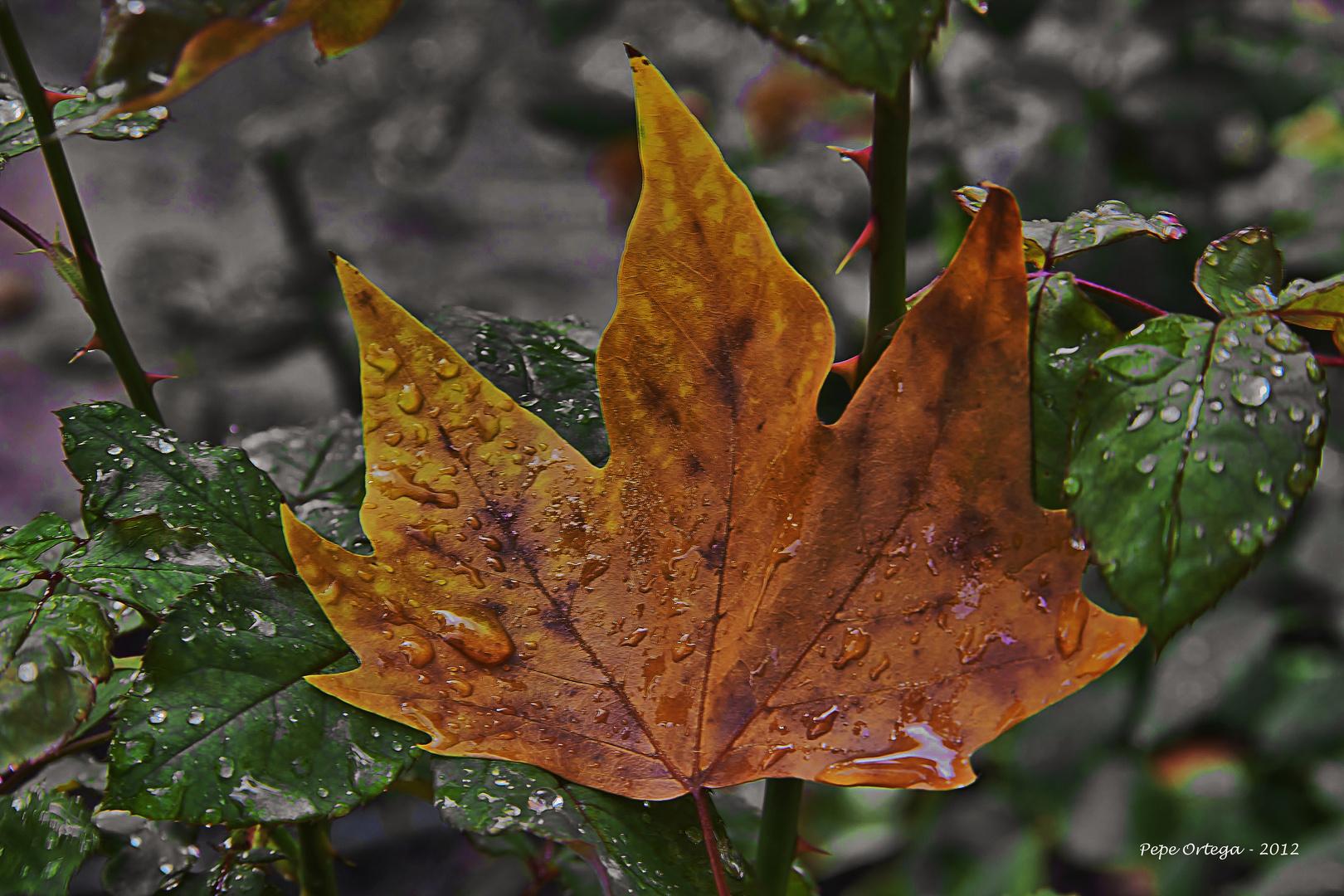 Gotas en otoño