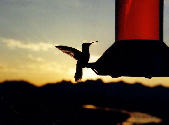 Gotcha' Birdy
