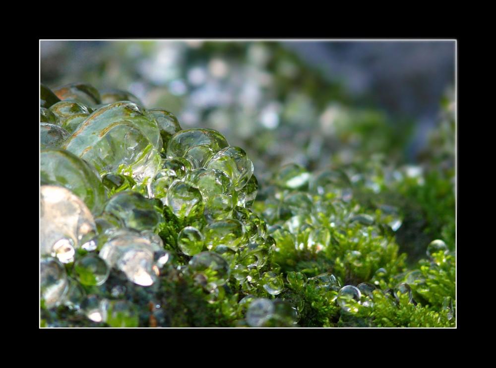 Gouttes d'eau gelées sur la mousse