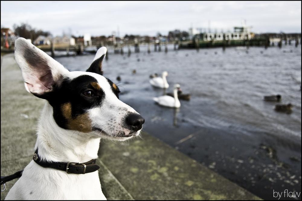 GPS-Hund