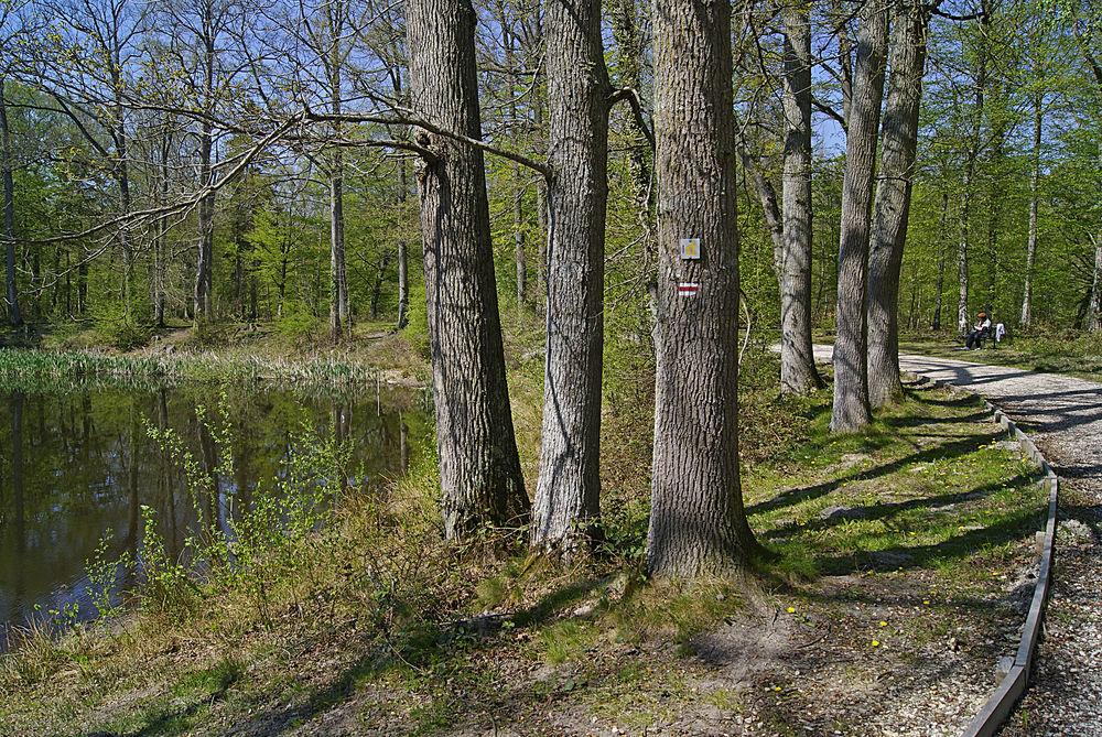 GR, forêt de fontainebleau