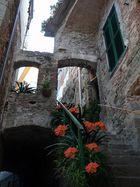 gradini fioriti di Clivia