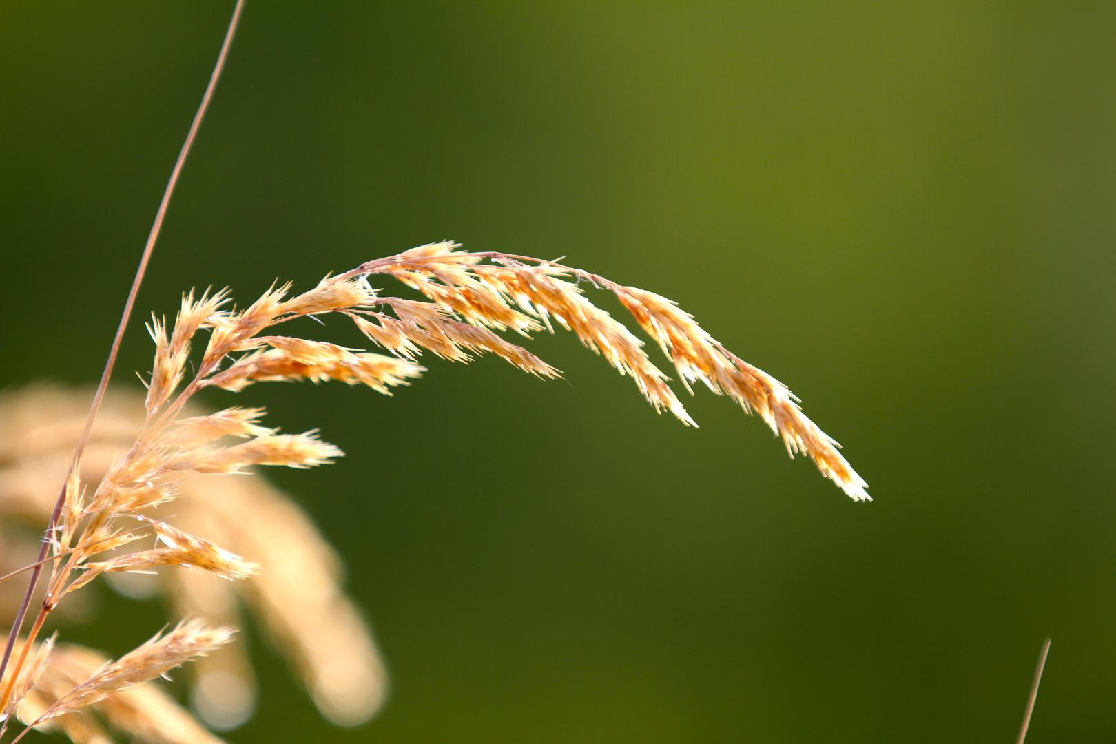 Gräser 1
