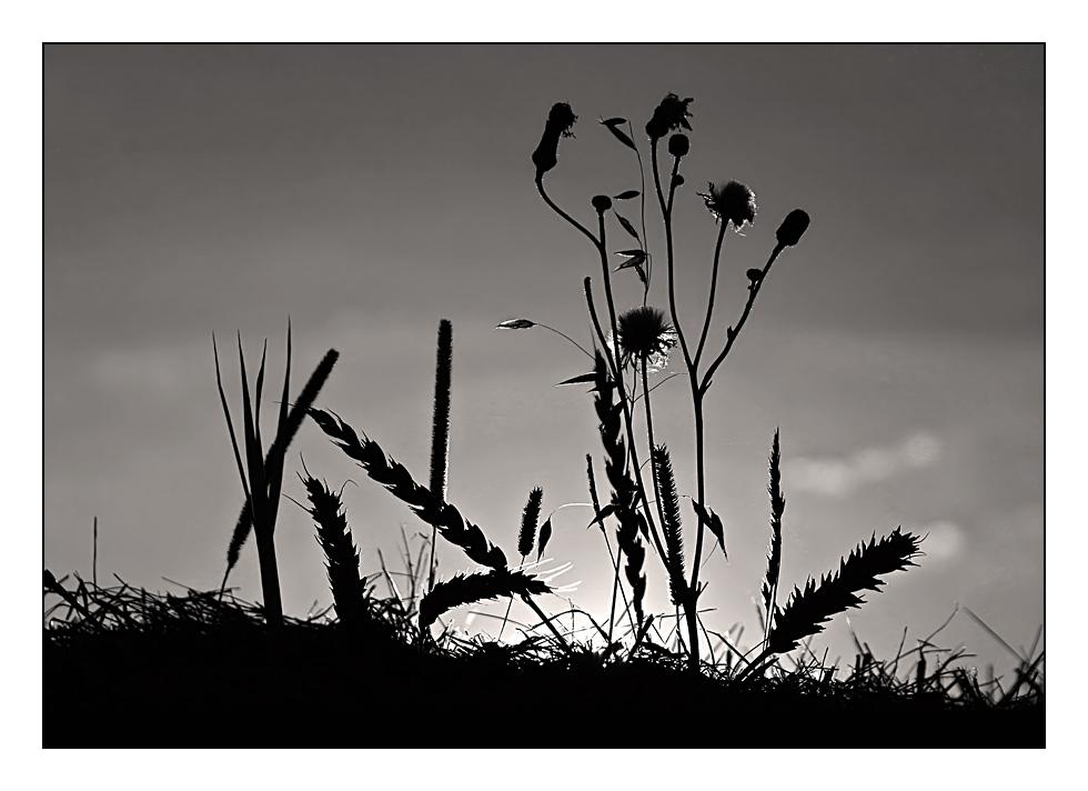 Gräser #2