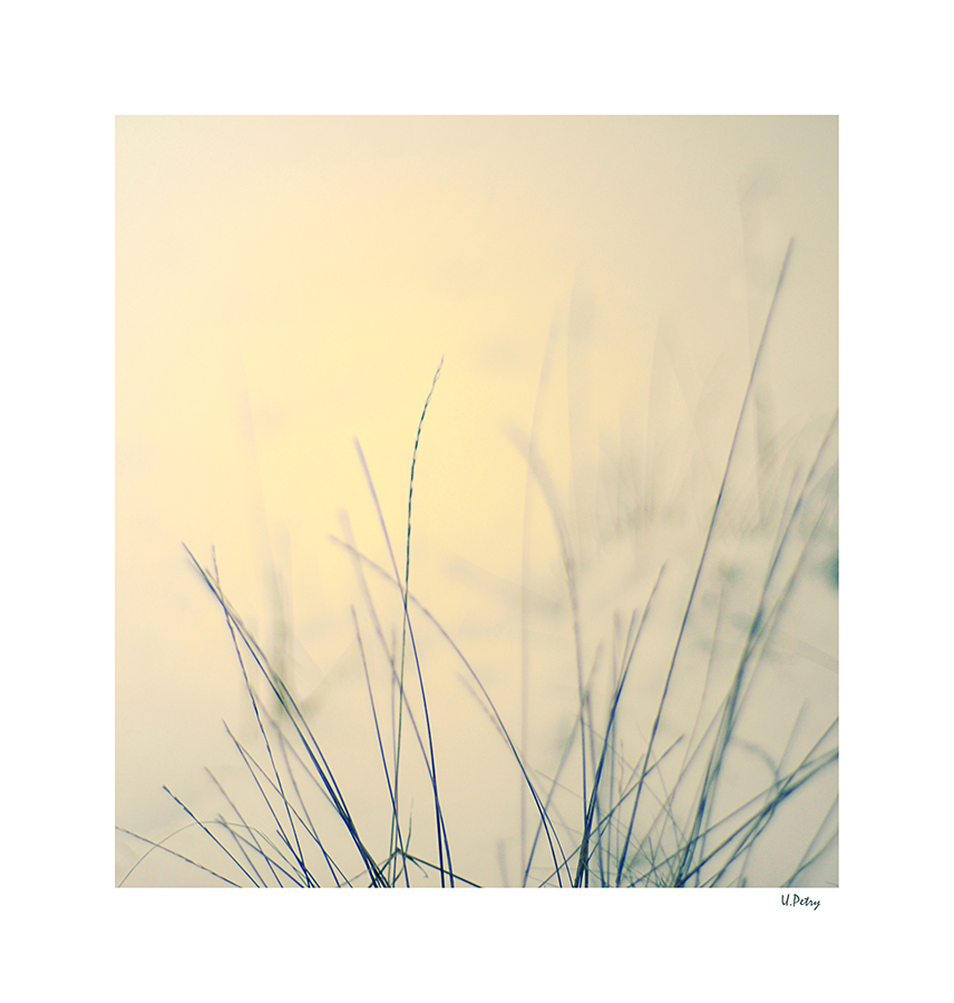 Gräser