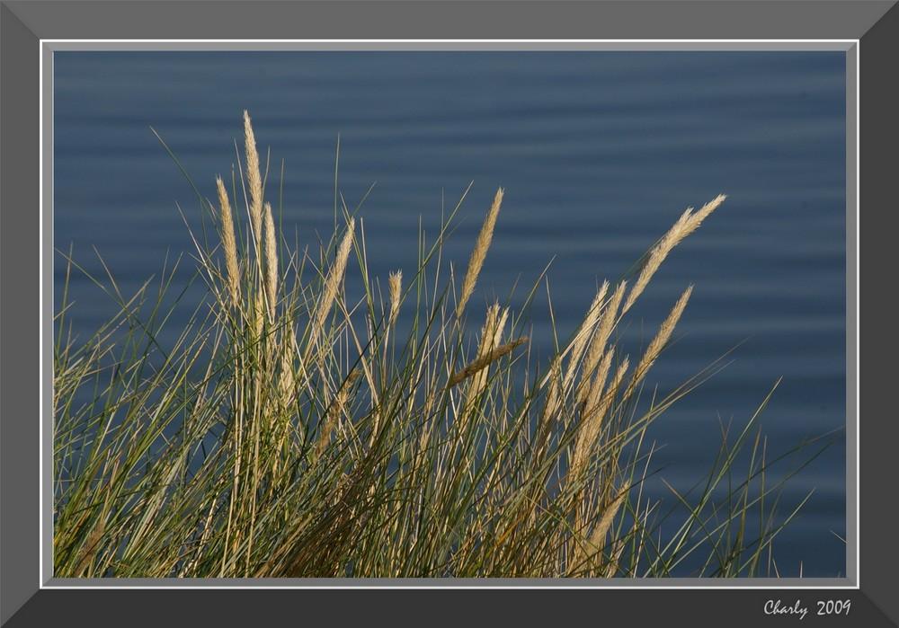 Gräser am Lister Königshafen