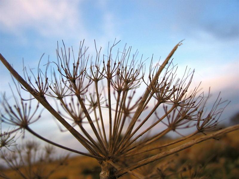 Gräser bei Sonnenuntergang