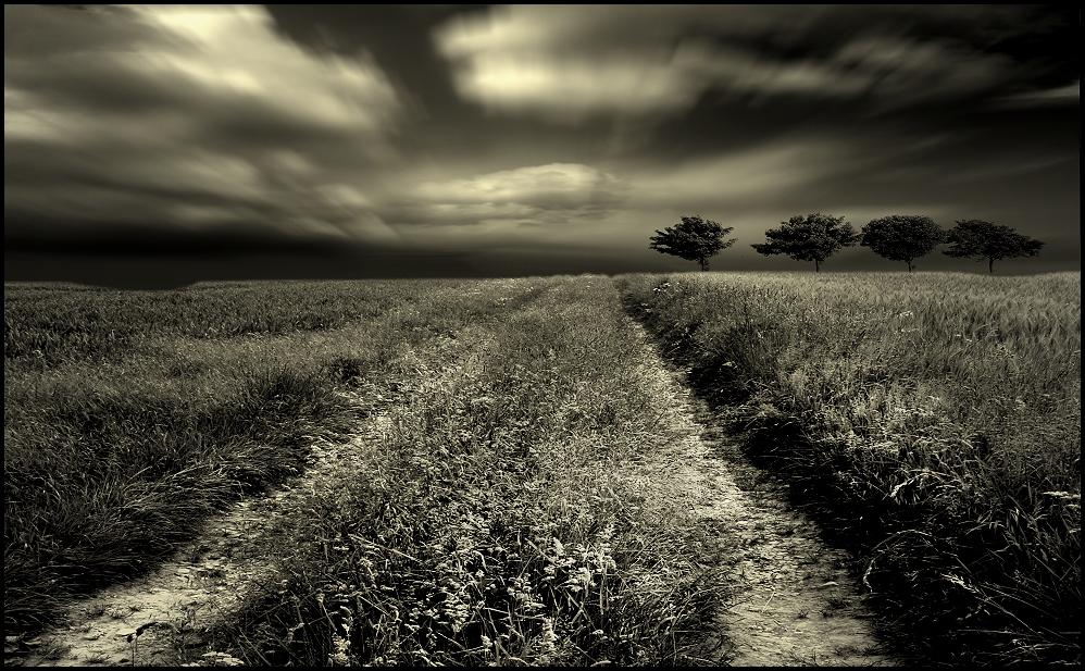 gräser....
