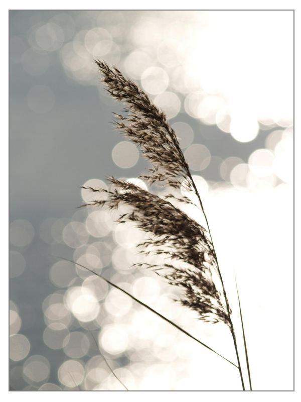 gräser im fluss... I