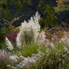 Gräser im Herbst...
