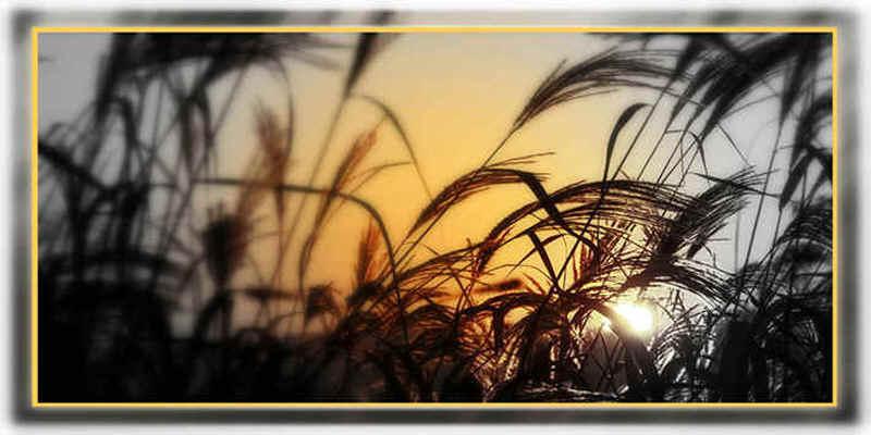 Gräser im Licht...