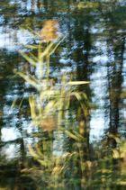 Gräser im Moor