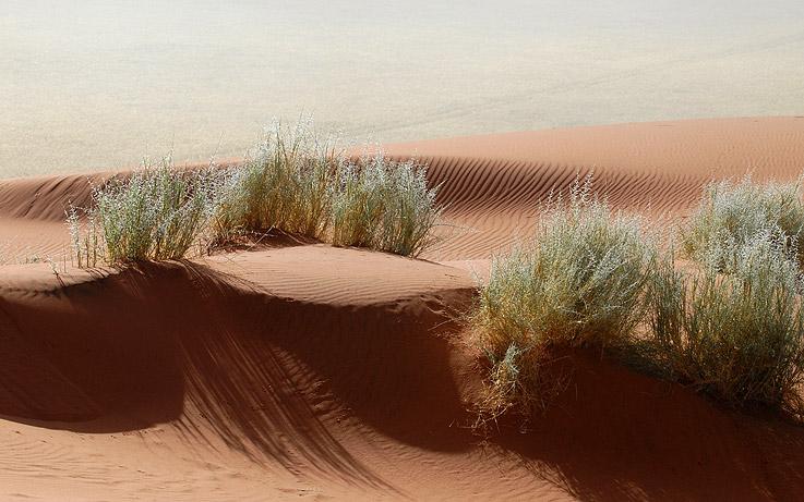Gräser im roten Sand
