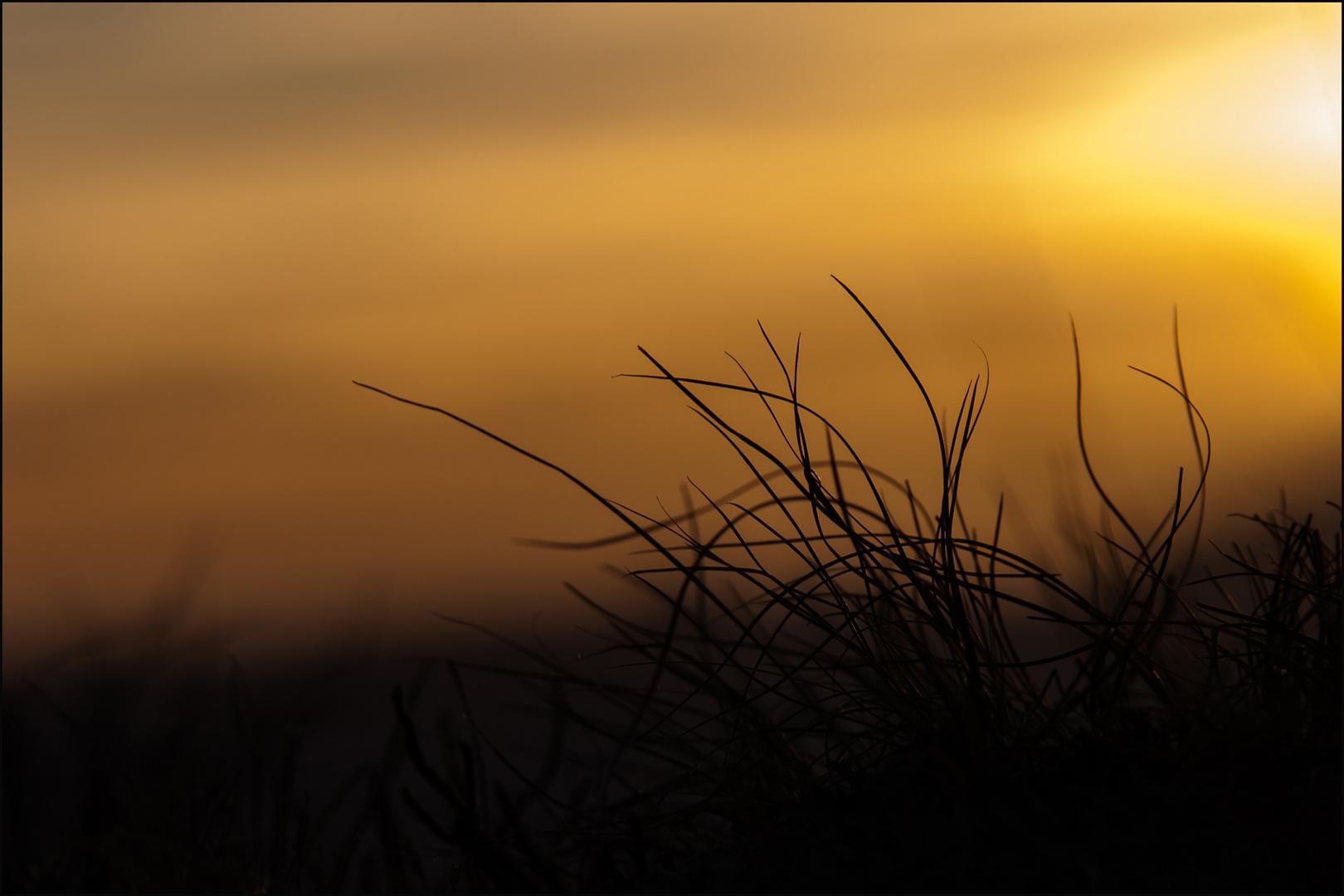 Gräser im Schein des Lichts