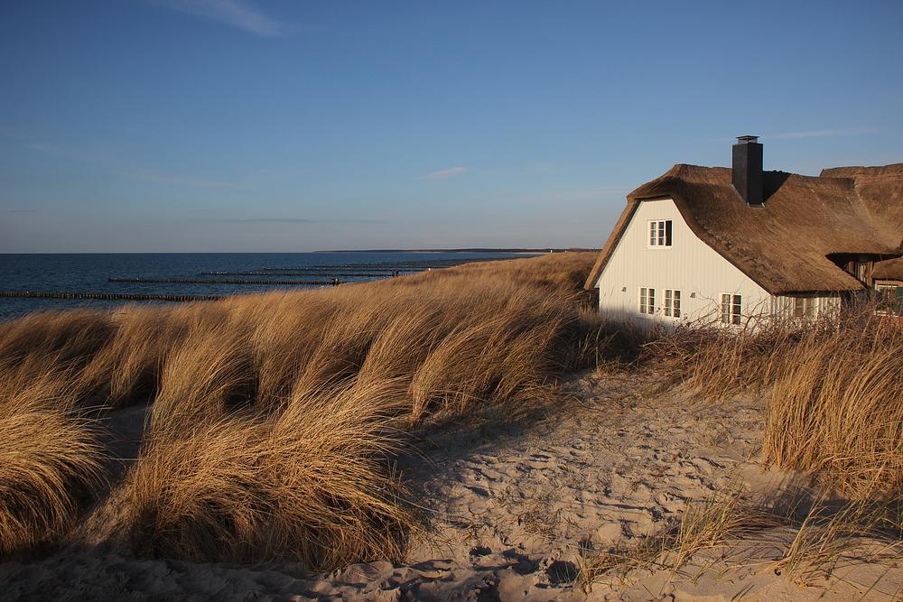 Gräser im Seewind
