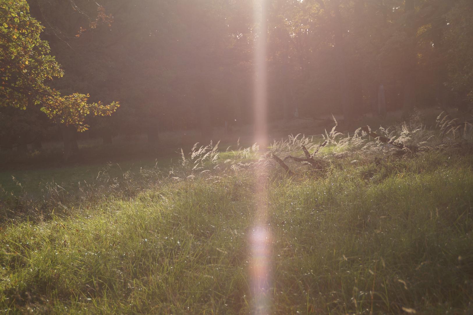 Gräser im Sonnenuntergeng