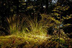 Gräser im Spotlight