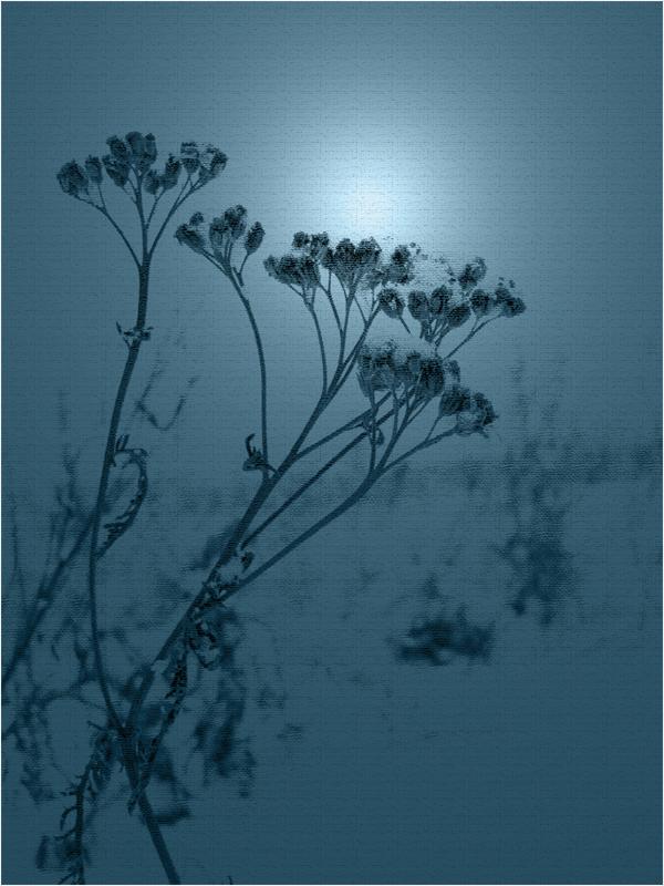 Gräser in Blau