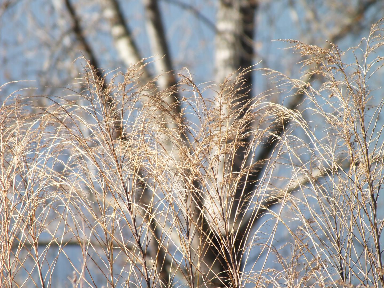 Gräser in der Stadt