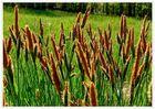Gräser können auch blühen !
