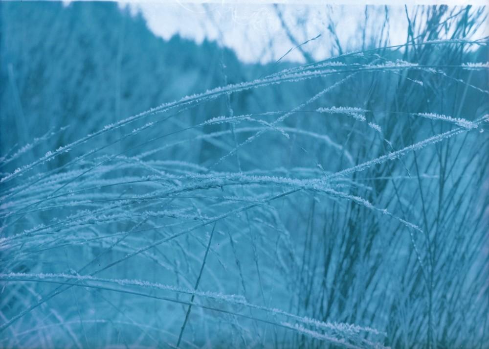 Gräser mit Frost