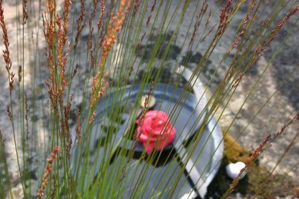 Gräser, Rose und Herz