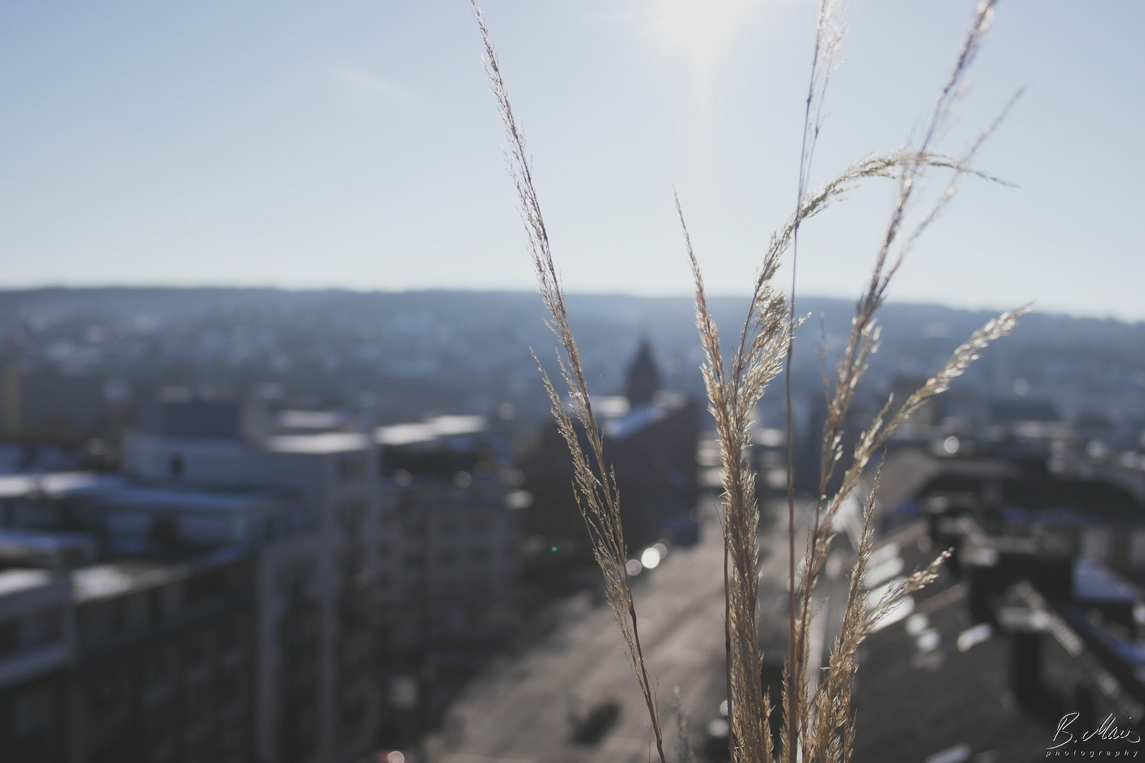 Gräser über dem Steinweg