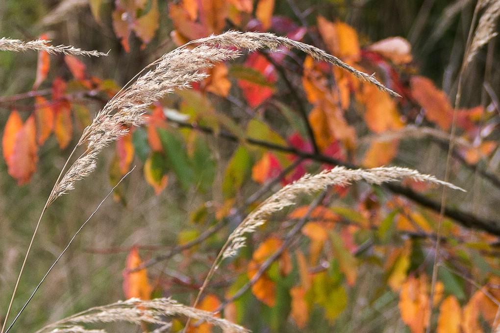 Gräser und Blätter im Herbst