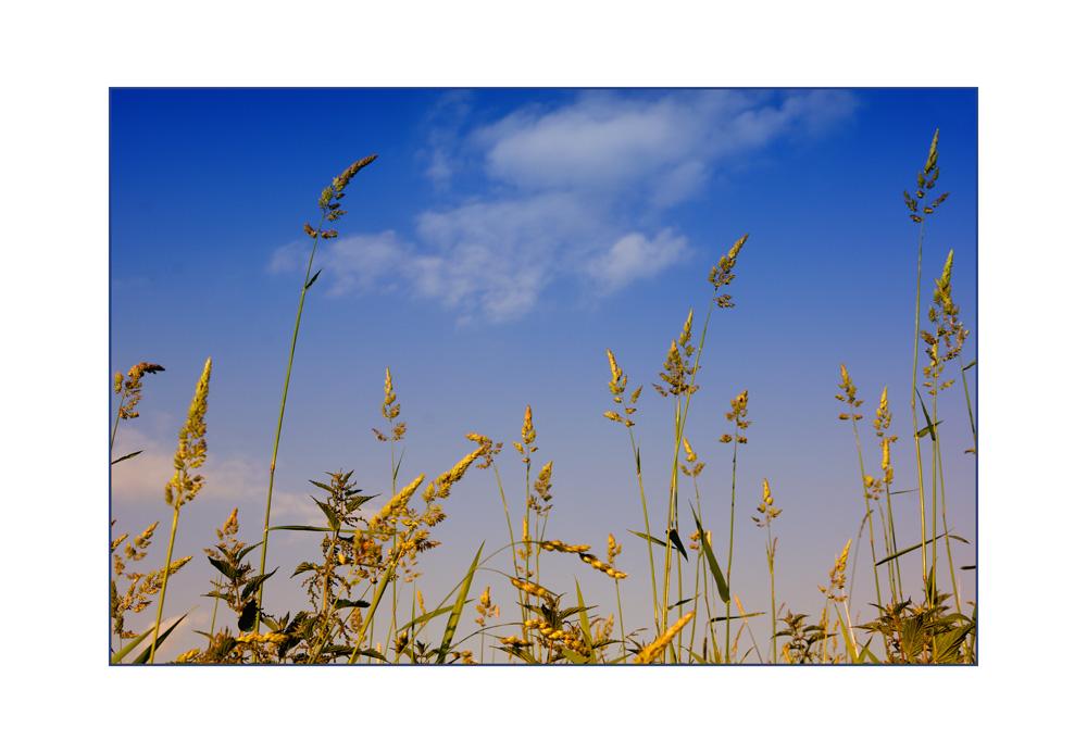 Gräser wiegen sich im Wind