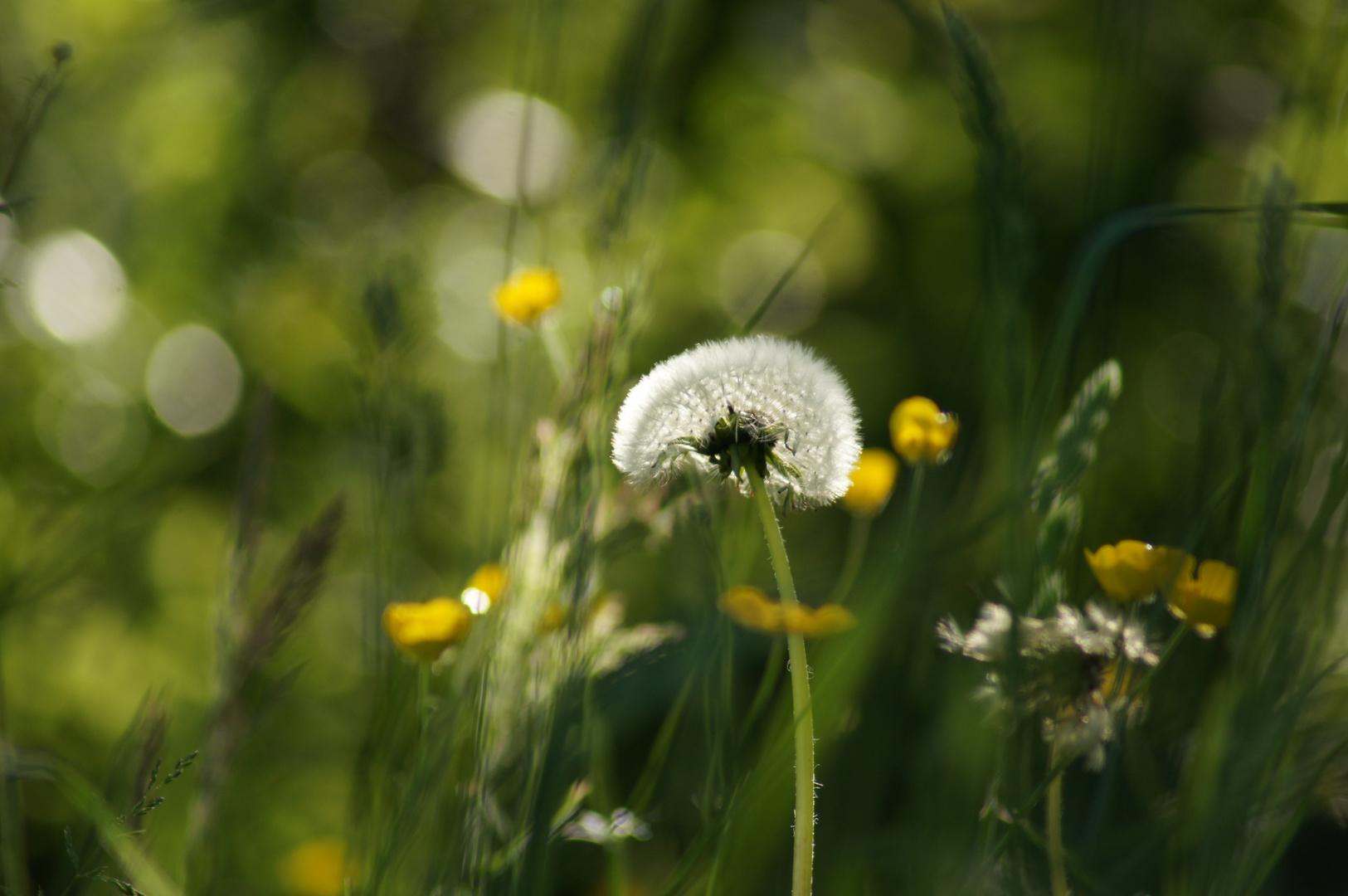 Gräser&Blumen