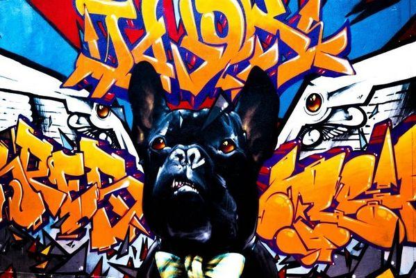 GRAFF DOG !!!!!!!