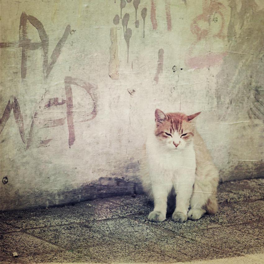 Graffiti-Katze