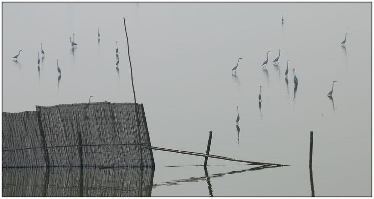 Grafica sul lago