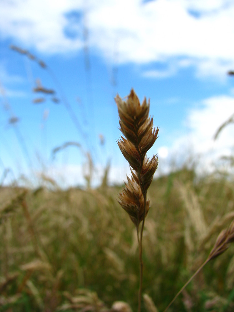 grain de nature