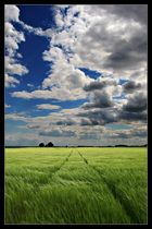 Grainway to the Sky