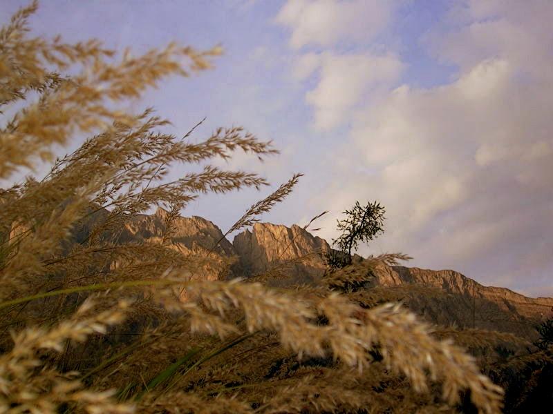 Graminées, ciel et montagne