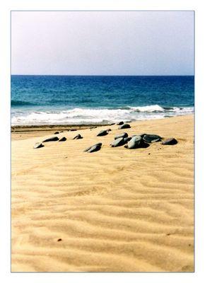 - Gran Canaria -