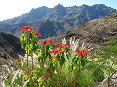 Gran Canaria im Dezember