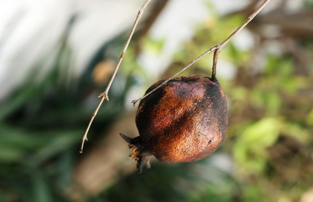 granada a punto de caer