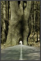 grand albero