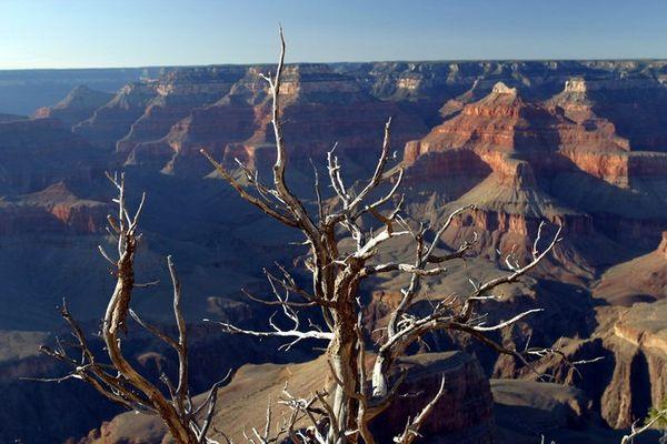 Grand Canyon Baum