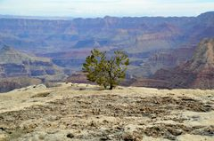 """ Grand Canyon der Baum """
