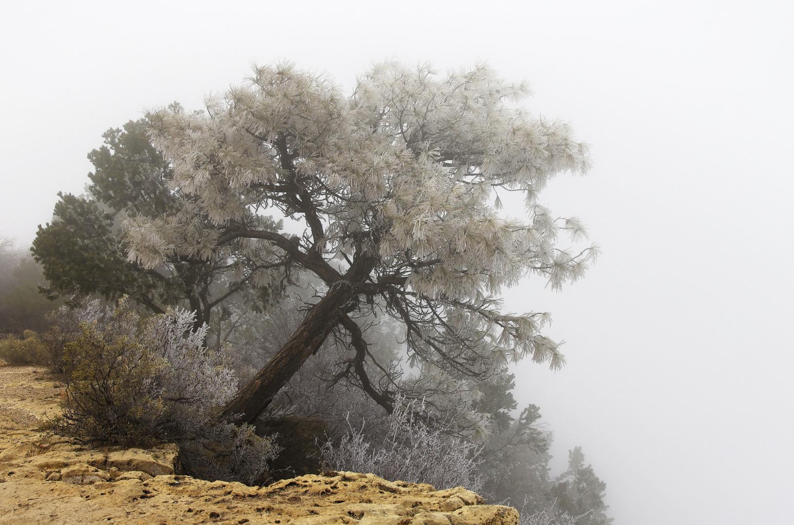 Grand Canyon - Life on the Edge