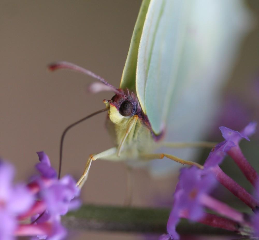 Grand écart pour le nectar...