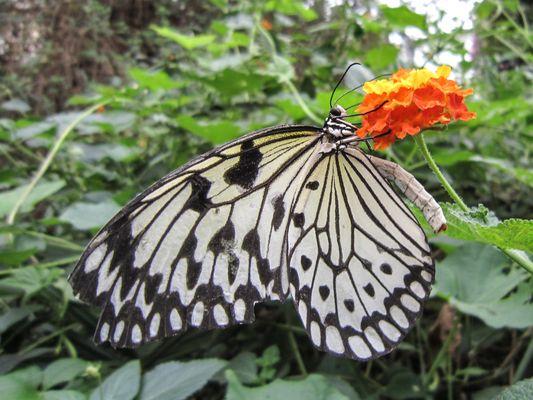 Grange aux papillons 4 Virelles